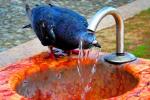 هشدار هواشناسی در باره  موج شدید گرما به کشور