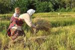 وزارت بهداشت : سم بیش ازحدمجاز در برخی محصولات کشاورزی / معاون وزیر جهاد:صحت ندارد